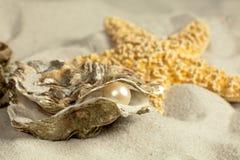 Huître avec la perle Photo stock