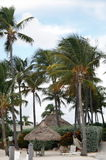 Huts and palms Royalty Free Stock Photography