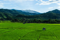 Huts in rice field at northern of Thailand. Stock Photography