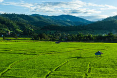 Huts in rice field at northern of Thailand. Stock Image