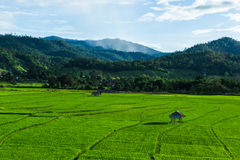 Huts in rice field at northern of Thailand. Stock Photos
