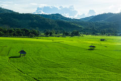 Huts in rice field at northern of Thailand. Royalty Free Stock Photo