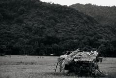 Huts in rice fields, black and white rice fields stock photography