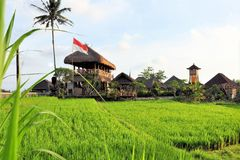 Huts in rice paddies near Ubud, Bali, Indonesia Royalty Free Stock Photos