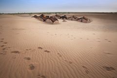Huts in Sahara desert. Royalty Free Stock Photography