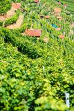 Huts in a vineyard Stock Image