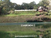Hutte dans la piscine de ferme et d'eau Image stock