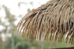 Hutte de toit de plan rapproché dans l'image de fond naturel de Forest Park photographie stock