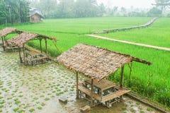 Hutte et abri à la rizière pour l'agriculteur Photo libre de droits