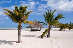Hutte et palmiers abandonnés photos stock