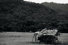 Hutten in padievelden, zwart-witte padievelden stock fotografie