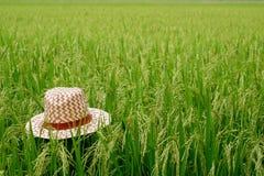 Hutwebart auf grünem Reisfeld, Ansicht eines Reisfelds auf dem Gebiet Stockfoto