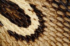 Huv av en kobra- och kobrahudtexturcloseup, söm för ormhud royaltyfri foto