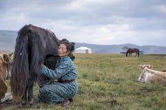 Huvsgul, Mongolia, September 6th, 2017: mongolian woman milking stock image