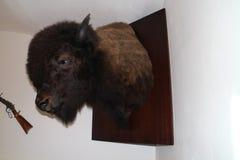 Huvud av bisonen - jakttrofé Royaltyfria Bilder