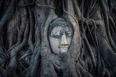 Huvud av Buddha Royaltyfri Bild