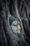 Huvud av Buddha, Ayutthaya, Thailand Arkivbilder