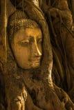 Huvud av Buddhabilden som omges av trädet Royaltyfria Foton