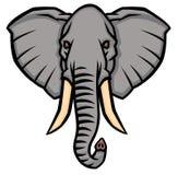 Huvud av en elefant med stora beten Fotografering för Bildbyråer