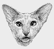 Huvud av en gå i ax katt Arkivfoto
