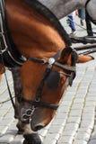 Huvud av en häst som hitching upp i Prague royaltyfri foto