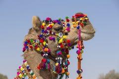 Huvud av en kamel som dekoreras med färgrika tofsar, halsband och pärlor Ökenfestival, Jaisalmer, Indien royaltyfria bilder