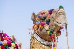 Huvud av en kamel som dekoreras med färgrika tofsar, halsband och pärlor Ökenfestival, Jaisalmer, Indien arkivfoton