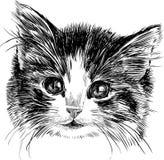 Huvud av en kattunge Arkivfoton
