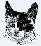 Huvud av en prickig kattunge Fotografering för Bildbyråer