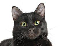 Huvud av en svart katt som ser kameran Arkivbilder