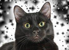 Huvud av en svart katt som ser kameran Royaltyfria Foton