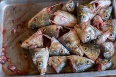 Huvud av fisken i en kopp, karpfisk går mot fisksoppa Arkivfoto