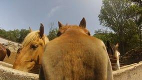 Huvud av hästar i sommaranseendet i paddocken
