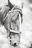 Huvud av hästen arkivfoton
