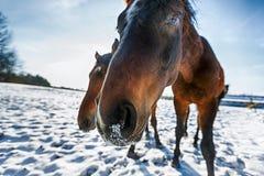 Huvud av hästen Fotografering för Bildbyråer