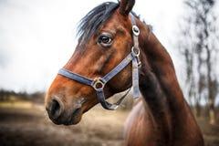 Huvud av hästen Royaltyfria Bilder