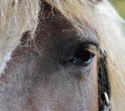Huvud av hästen, detalj Royaltyfria Bilder