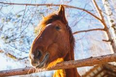 Huvud av hästen på en solig dag arkivbild