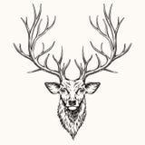 Huvud av hjortar Arkivbild