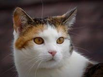 Huvud av katten arkivbilder