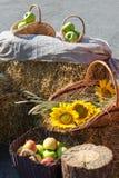 Huvud av korn, äpplen och solrosor Skörd på Royaltyfria Bilder