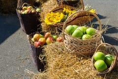 Huvud av korn, äpplen och solrosor Skörd på Arkivbild