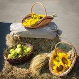 Huvud av korn, äpplen och solrosor Skörd på höstacken Arkivbilder