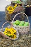Huvud av korn, äpplen och solrosor Skörd på höstacken Royaltyfria Bilder
