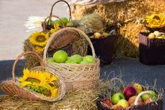 Huvud av korn, äpplen och solrosor Skörd på höstacken Fotografering för Bildbyråer