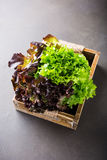 Huvud av ny organisk grönsallatsallad Fotografering för Bildbyråer