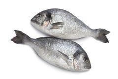 huvud för breamsfiskgilt royaltyfri fotografi