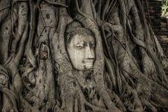 Huvud för Buddha` s i ett träd, Ayutthaya fotografering för bildbyråer
