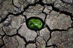 Huvud för grön orm i hålet Arkivbild