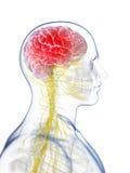 Huvud - huvudvärk Arkivfoto